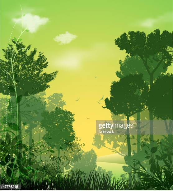 tree silhouette landscape