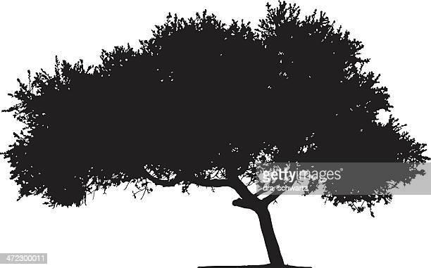 木のシルエット - アカシア点のイラスト素材/クリップアート素材/マンガ素材/アイコン素材