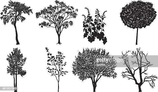 Silhouette d'arbre