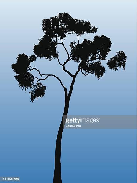 tree silhouette - eucalyptus tree stock illustrations