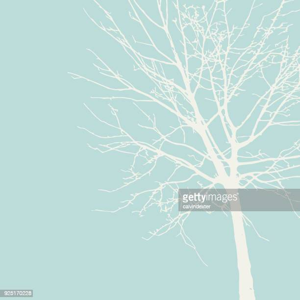 tree silhouette - tree stock illustrations