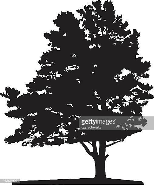 Tree silhouette, Vector