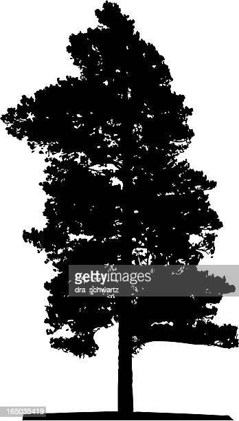 Silueta de árbol, Vector
