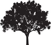 Tree silhouette, Vector