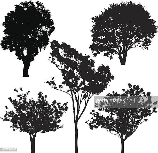 tree silhouette, vector - deciduous tree stock illustrations, clip art, cartoons, & icons