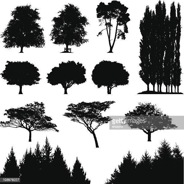 illustrations, cliparts, dessins animés et icônes de silhouettes d'arbre - arbre