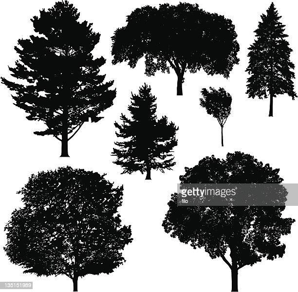 tree silhouettes - ash stock illustrations, clip art, cartoons, & icons
