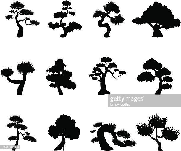 tree silhouettes - bonsai tree stock illustrations