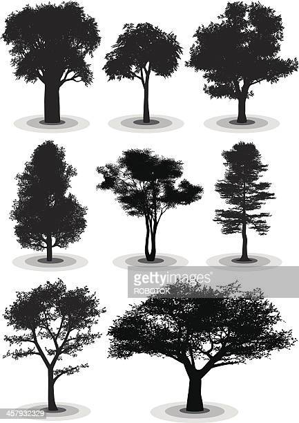 Maple Tree Stock Illustrations And Cartoons Getty Images