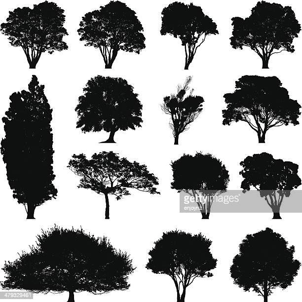 tree silhouettes - tall high stock illustrations
