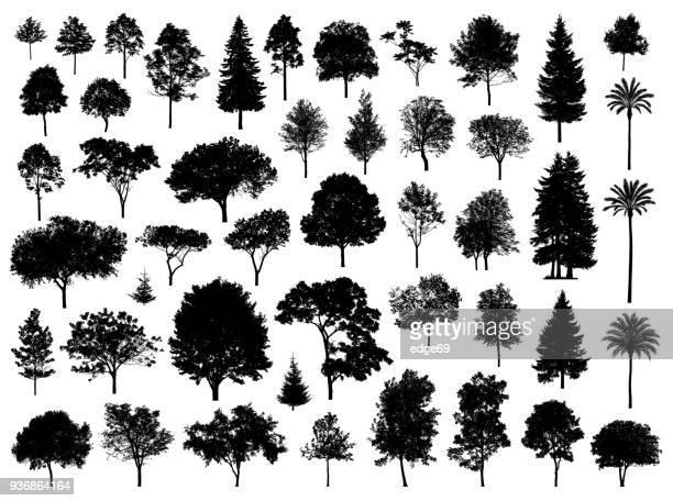 木のシルエット - coniferous tree点のイラスト素材/クリップアート素材/マンガ素材/アイコン素材