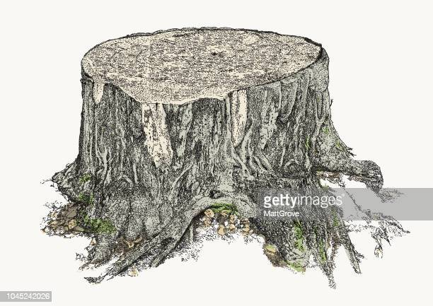 tree stump - tree trunk stock illustrations, clip art, cartoons, & icons