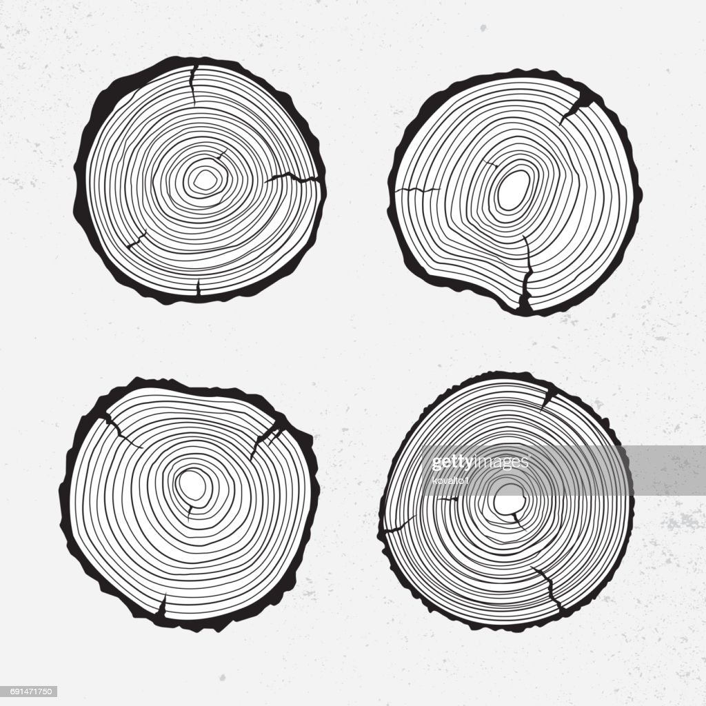 Tree trunk cross section, line design