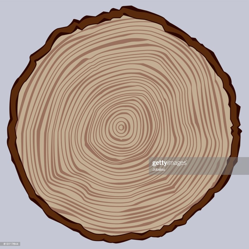 Tree Trunk Section : stock illustration