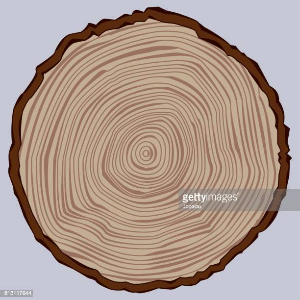 tree trunk section - tree trunk stock illustrations, clip art, cartoons, & icons