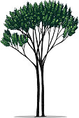 Tree vector by hand drawing.