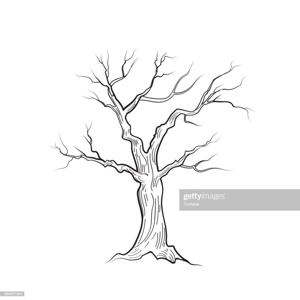 boom zonder bladeren natuur teken floral winter buiten