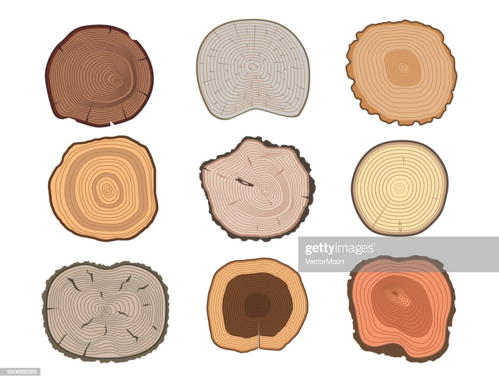 Tree wood trunk slice texture circle cut wooden raw material vector detail plant years history textured rough forest tree top