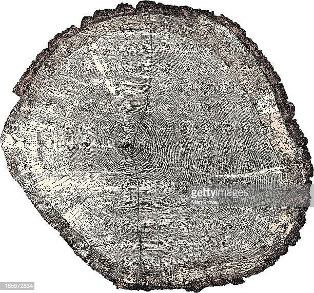tree x-section - tree trunk stock illustrations, clip art, cartoons, & icons