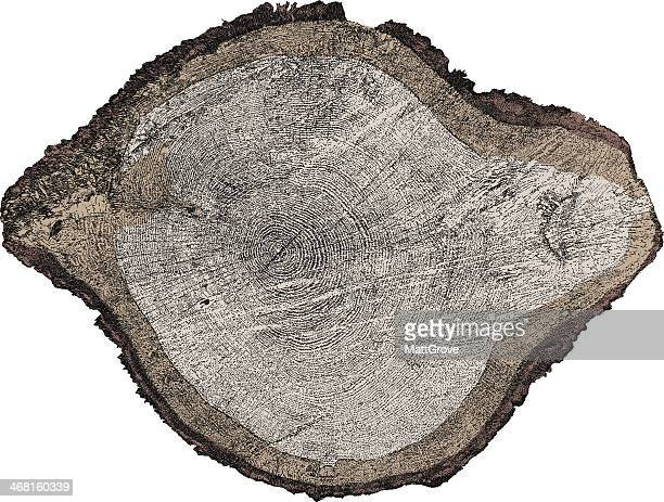 tree x-section - tree rings stock illustrations, clip art, cartoons, & icons