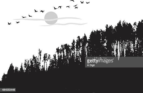 treeline landscape - treelined stock illustrations, clip art, cartoons, & icons