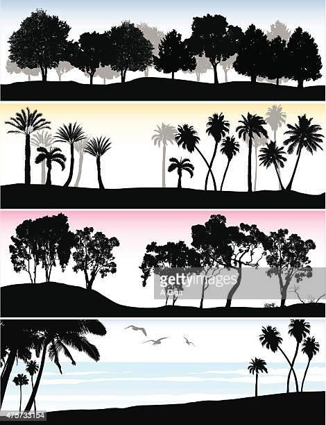 treeline ocean - eucalyptus tree stock illustrations