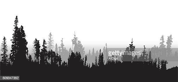 treeline spruce and pines - spruce tree stock illustrations