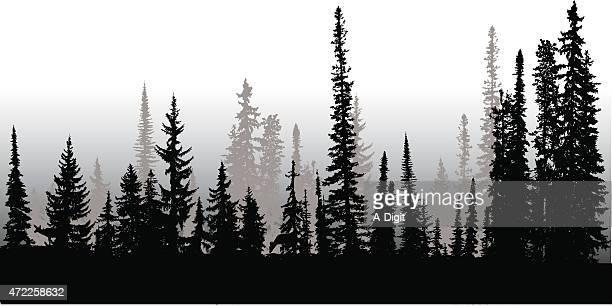 illustrazioni stock, clip art, cartoni animati e icone di tendenza di treeline a nord - peccio