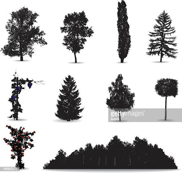 trees and vines - coniferous tree stock illustrations, clip art, cartoons, & icons