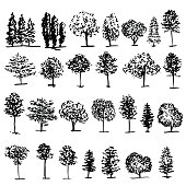 Trees graphic hand drawn vector engraving doodle sketch isolated on white background, vintage style, template for design pattern, collection of brush, printing, elements package eco product