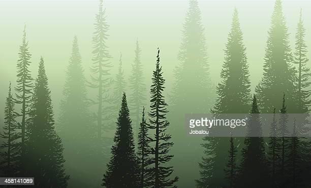 trees in the green mist - tree stock illustrations