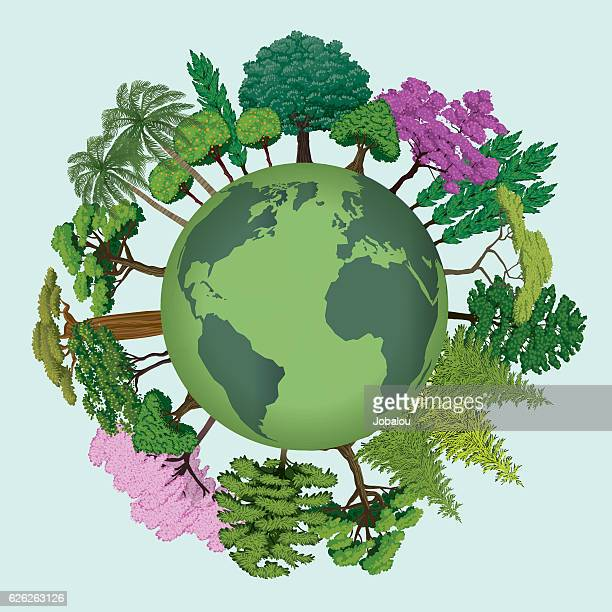 ilustrações de stock, clip art, desenhos animados e ícones de trees of the planet earth - laranjeira
