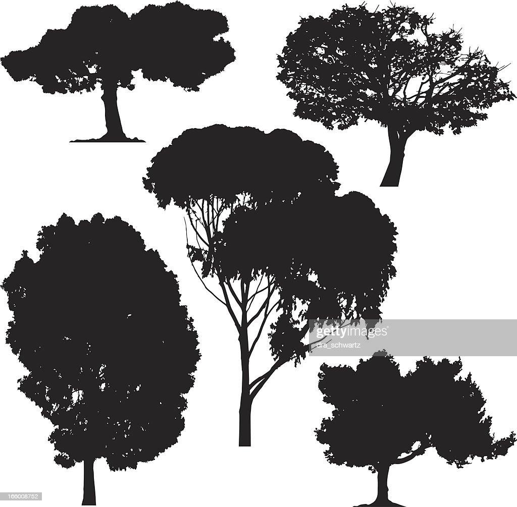 Trees, vector