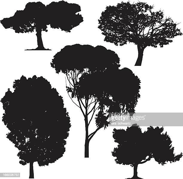 trees, vector - deciduous tree stock illustrations, clip art, cartoons, & icons