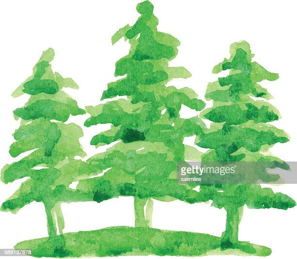 trees watercolor - coniferous tree stock illustrations, clip art, cartoons, & icons