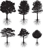 Trees with roots silhouettes black and white vector icon set