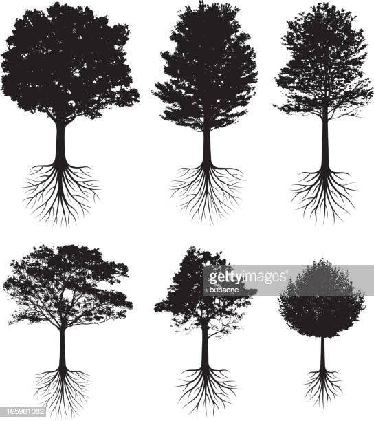 trees with roots silhouettes black and white vector icon set - root stock illustrations, clip art, cartoons, & icons
