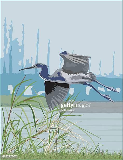 Tri-Colored Heron in the Delta