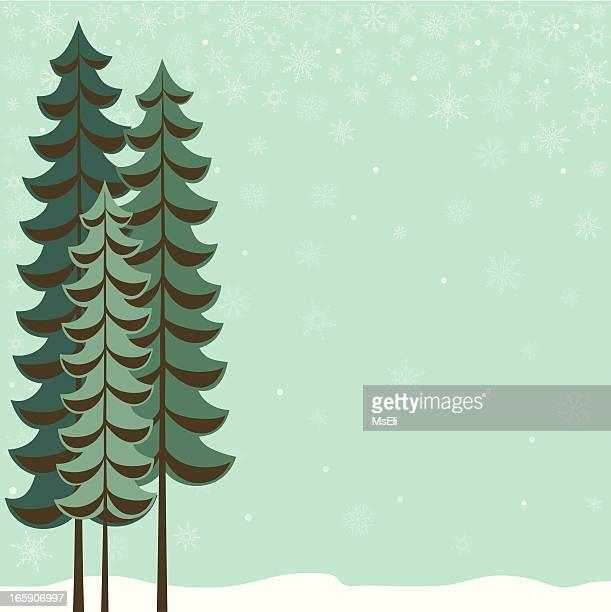 Trio of tall evergreen trees in winter