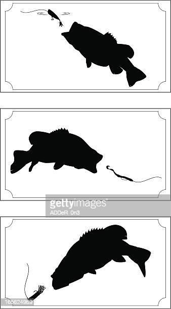 World's Best Largemouth Bass Stock Illustrations - Getty ...