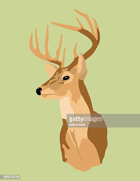 trophy deer - stag stock illustrations