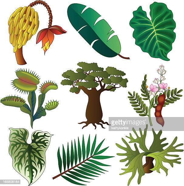 tropical african plants - venus flytrap stock illustrations, clip art, cartoons, & icons