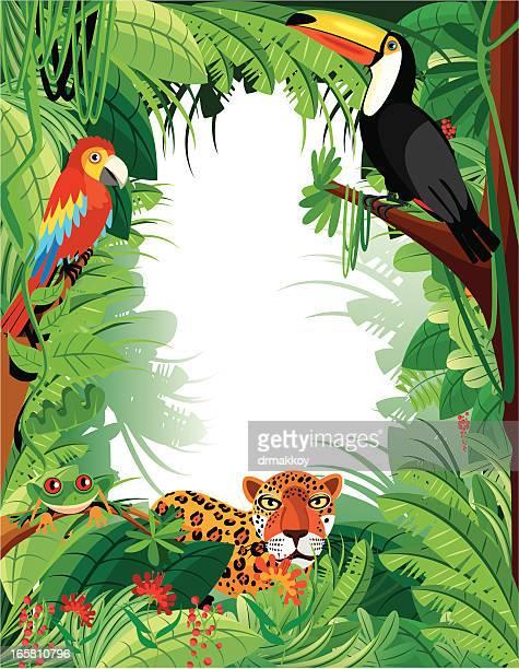 Tropical Amazon