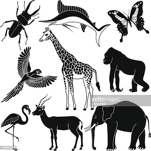 tropical animals in black and white - flamingo stock illustrations, clip art, cartoons, & icons