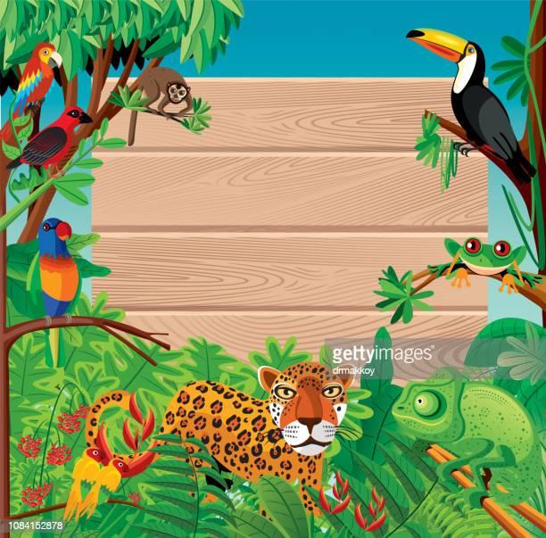 ilustraciones, imágenes clip art, dibujos animados e iconos de stock de madera y fondo tropical - biodiversidad