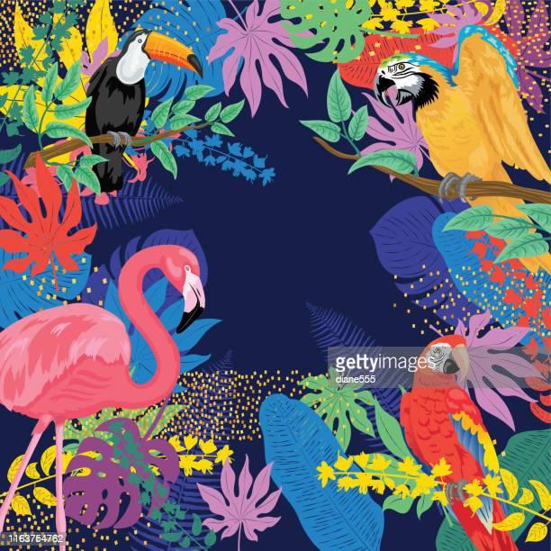 ilustraciones, imágenes clip art, dibujos animados e iconos de stock de fondo tropical con loros flamencos y tucanes - pájaro tropical