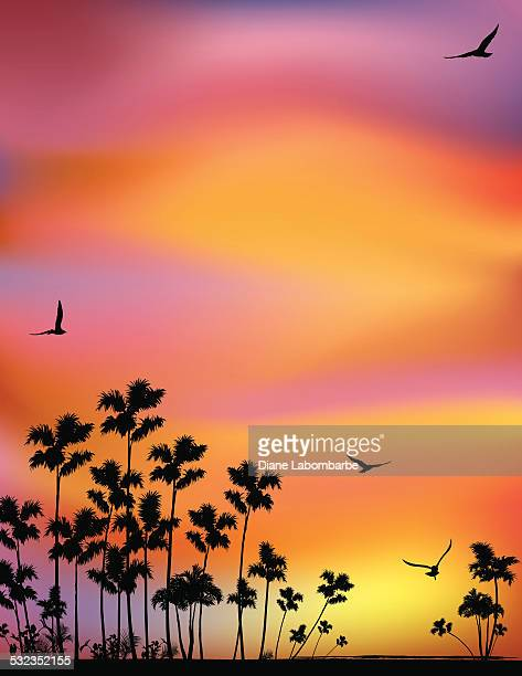 Tropical Background With Palm Trees And Sunset