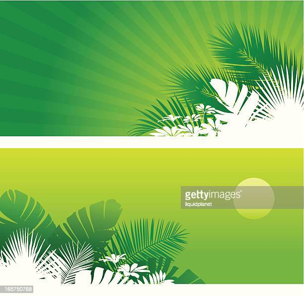 tropical backgrounds/banners - latin music stock illustrations, clip art, cartoons, & icons