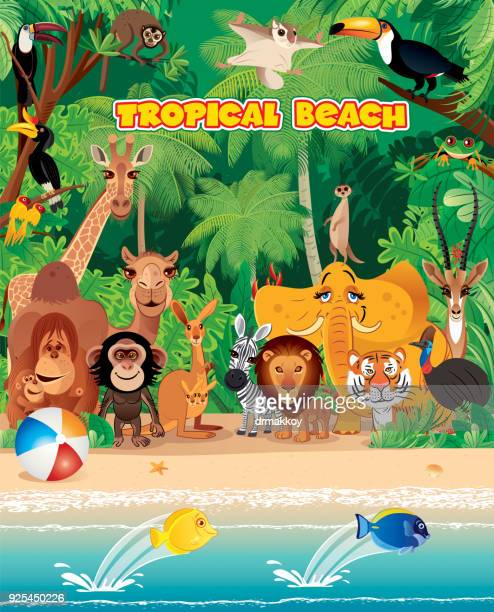 tropical beach and animals - australia day stock illustrations