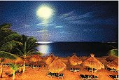Tropical Beach And Moonlight